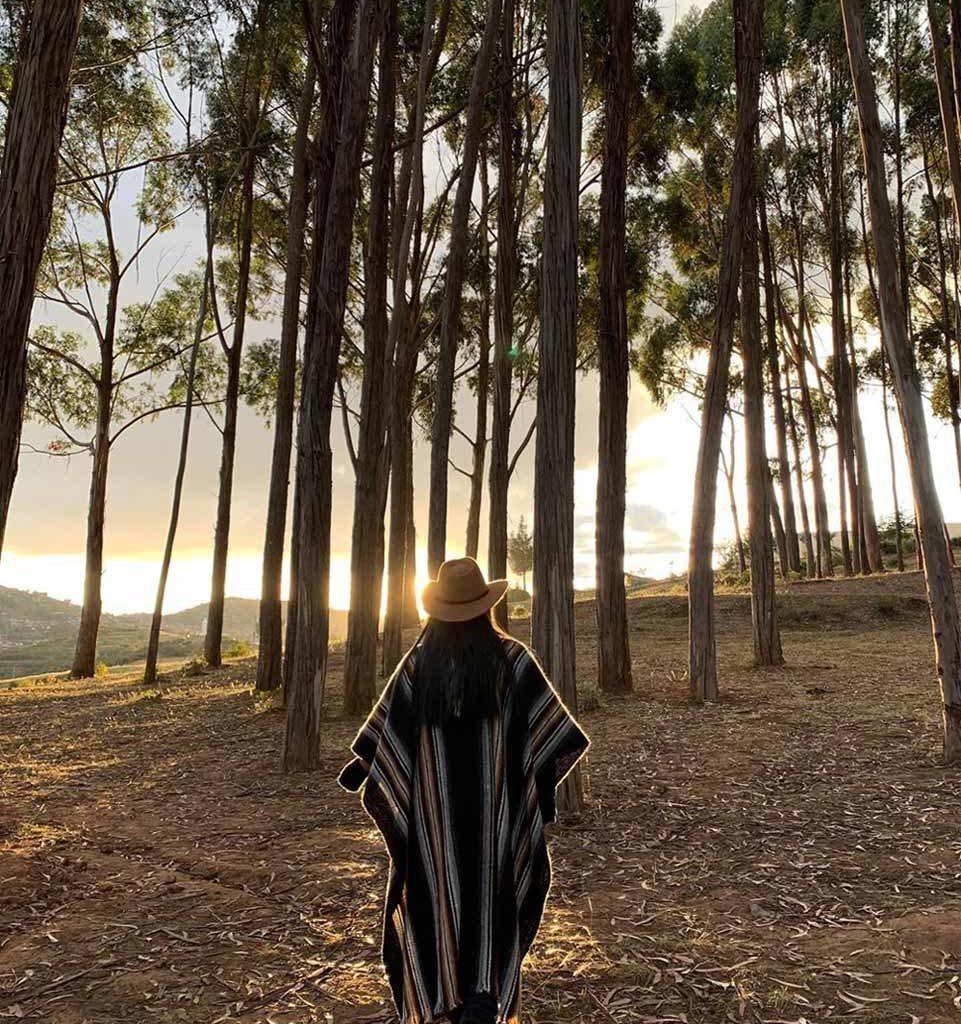 Bosque de eucaliptos Cusco