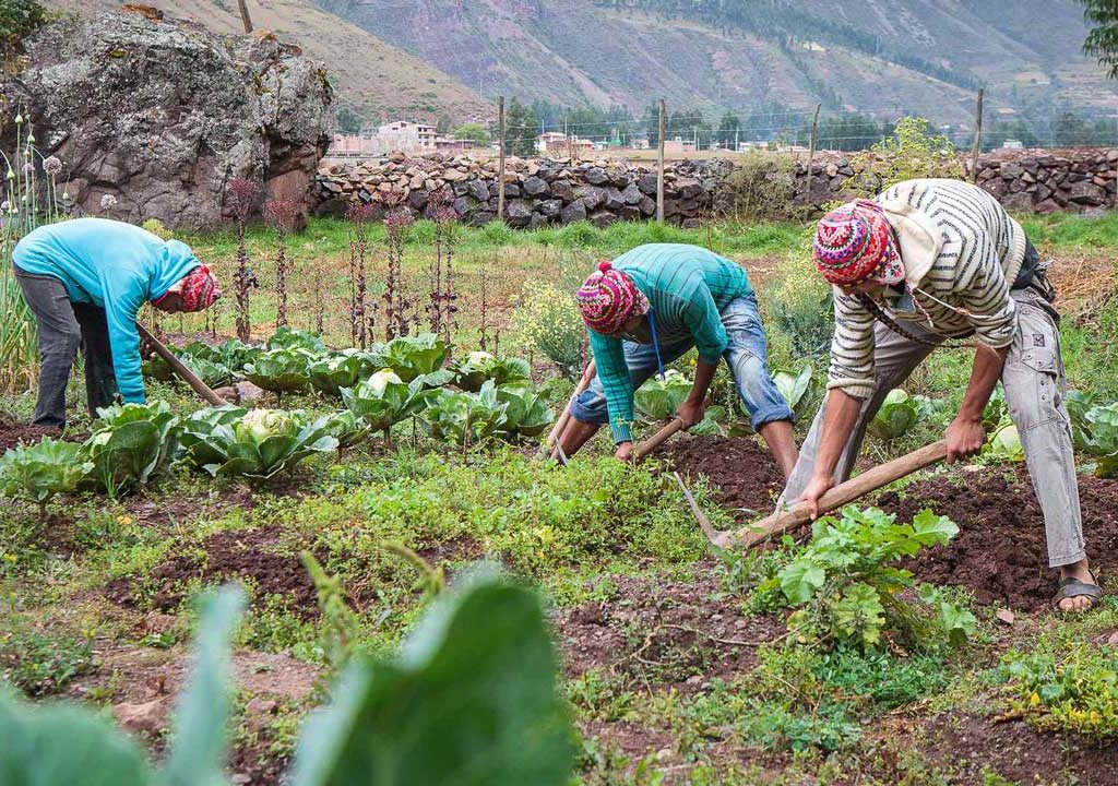Local Farmers in Cusco