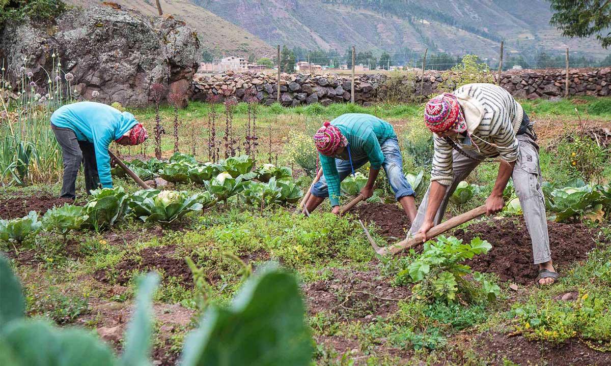 Local Farmers in Cusco